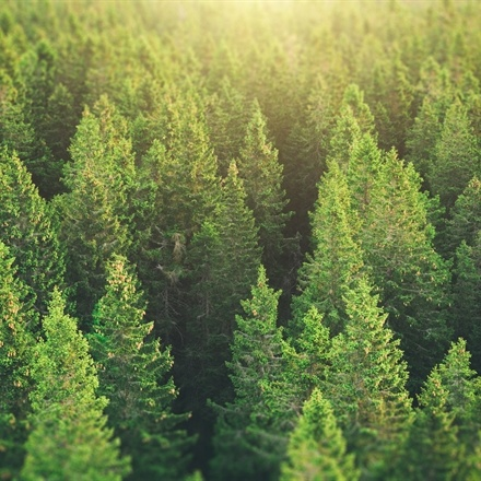 How To Create a Content Strategy: The Importance of Evergreen Content
