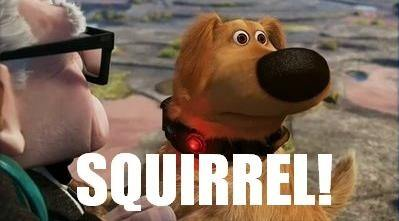 Squirrel from Disney Pixar animation, Up!